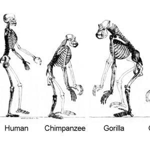 人間に進化はなく、異種交配?人間の起源とは?