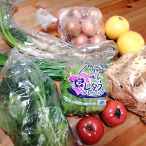 今日も産直野菜を買ってきた♫〜樹齢100年の桜の写真あり〜