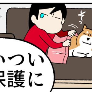 【ついつい柴犬に過保護になってしまう飼い主】まんがシリーズが動画になったよ!