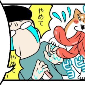 本能のままに生きる野蛮な柴犬
