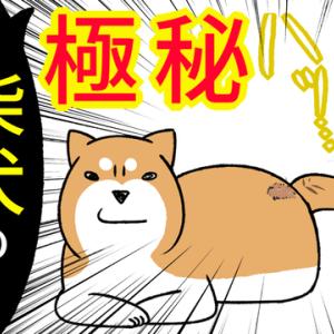 極秘!柴犬の『しっぽ』は、実は…&前世のうらみがある柴犬