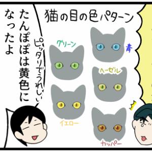 野良子猫の瞳の色が変化してきた!何色になったかというと…