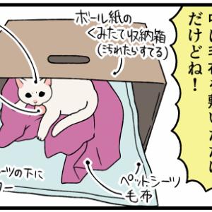 元・野良子猫のために100均グッズでハウスを作ってみた!反応は…