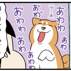 みんなそれぞれ鳴き声の個性が強め!子猫と柴犬と宇宙猫