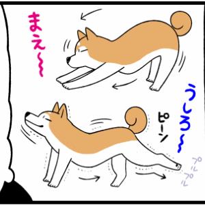 犬と猫の「のびのび」を観察…謎の音がする!?