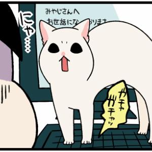 超甘えん坊な子猫のおかげで『謎の能力』が身についた飼い主