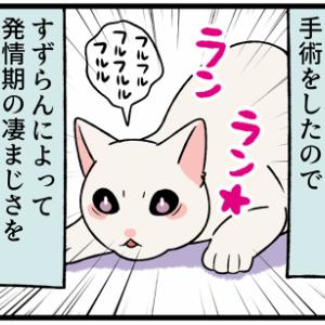 予定より早く子猫の初めての〇〇が始まってしまった!