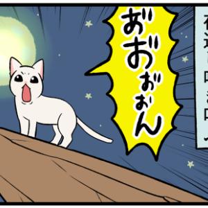 猫の発情期なめてた…『猫が変わったように』なってしまう!?