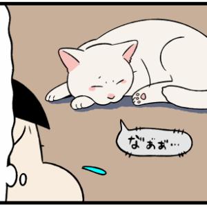 発情期の猫を家の中で飼うと、こんなことが辛すぎる