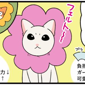ピンクのお花の形をした『子猫の救世主』を使ってみた