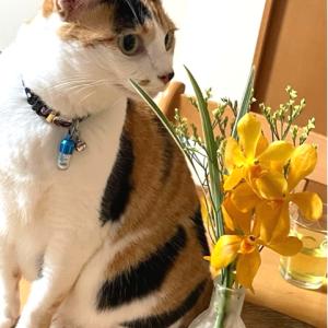 お花が自動でポストに届く『bloomee』を初体験してみた