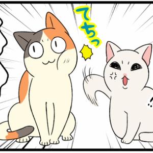 子猫をストーカーする猫、その目的とそこに愛はあるのか?【9】