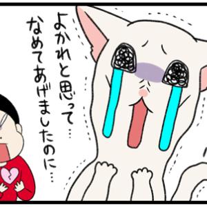 猫からの「お気持ちだけ」受け取りたい愛情表現