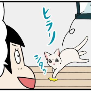 華麗な跳躍力を人間のためには一切使ってくれない、それが猫
