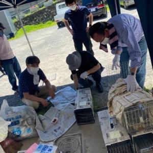 今年度初の上山田温泉自治会地域猫化手術!…そしてTシャツ、いかがっすか~