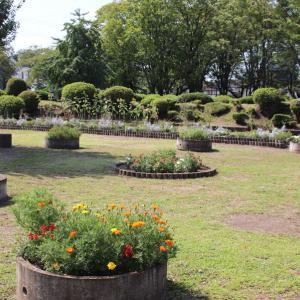 鹿沼公園のお花散歩 ひまわりの咲く風景と 他