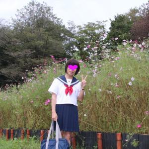 津久井路の こすもすの咲く公園散歩