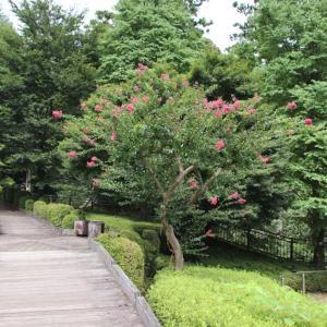 宮ケ瀬ダムの風景と一緒に その5