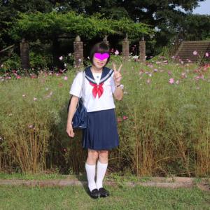 津久井湖畔の こすもすの咲く風景