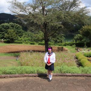 津久井湖畔の こすもす畑 再訪