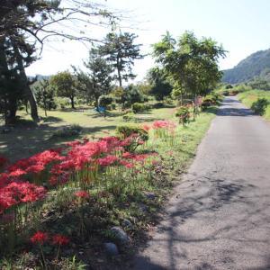 彼岸花の咲く風景を見ながら その2