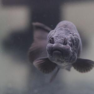 黒い金魚には黒い石?