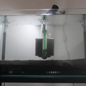 レッドビー2号水槽立ち上げ( 半地下対策はムリ>_