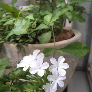 Power of Plant を感じる初夏の息吹