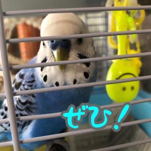 鳥のことば