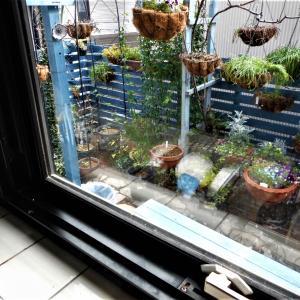 台所窓からの景色