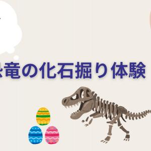 100円!おうちでできる『恐竜の化石堀』体験。