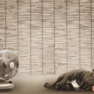 サーキュレーターと扇風機どちらが涼しい?それぞれの上手な使い方