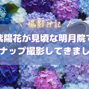 紫陽花が見頃な明月院でスナップ撮影してきました|明月院ブルー