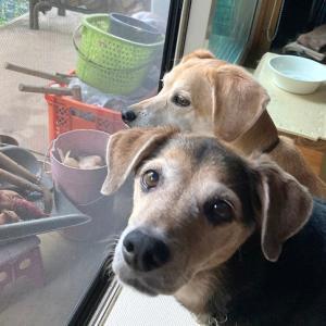 犬ご飯 タラ