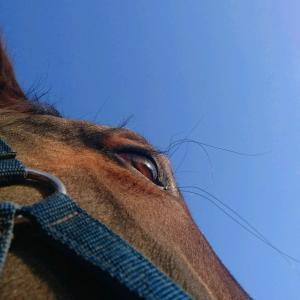 【馬を知ろうよ!】シリーズ #2 馬の感覚機能