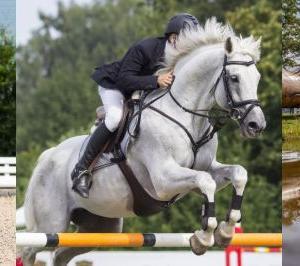 【オリンピック目前!】#4 馬術というスポーツ【馬を知ろうよ!】