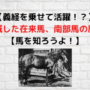 【義経を乗せて活躍!?】絶滅した在来馬、南部馬の歴史【馬を知ろうよ!】