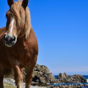 【下北半島観光】寒立馬の放牧が見られる尻屋崎ってどんなところ??【レポ】