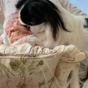 我が家の蚊取り線香、愛犬の虫対策