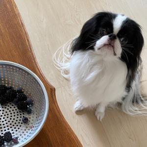 Hello! 8月 愛犬が「アレルギー検査しません」って言われたワケ