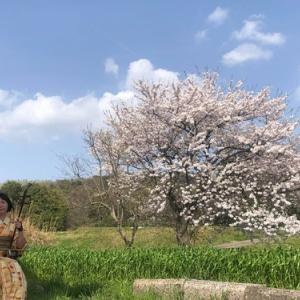 桜をバックに演奏