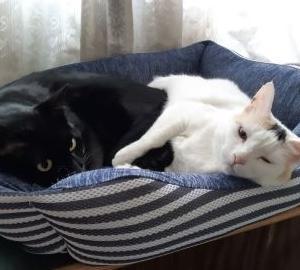 子猫用と成猫用