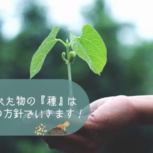 【赤肉メロン栽培】とりあえず食べた物の『種』は植えてみる⁈の方針でいきます!