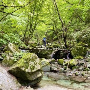 【西丹沢】畦ヶ丸|まばゆい緑が彩る渓流沿いコース&滝めぐり!