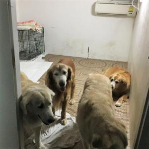 我が家の犬たちの紹介・・・その①