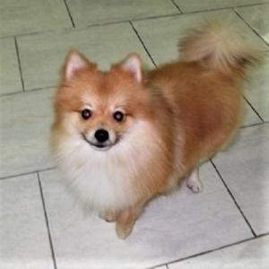 我が家の小型犬:我が家の犬たち・・・その②