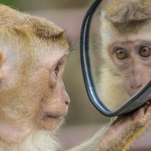 猿に出会ったら、どうする?