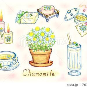 """春~初夏におすすめのハーブ""""ジャーマン・カモミール"""""""