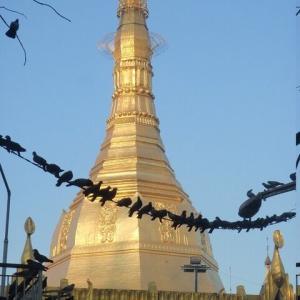 ミャンマー瞑想道場ジプシー日記 129日目 メス猫の発情 二〇一八年二月三日【土】