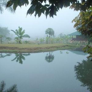 ミャンマー瞑想道場ジプシー日記 131日目 体重増量作戦 二〇一八年二月五日【月】